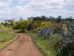 flowering drive
