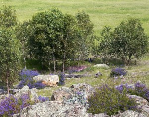 Wild flowers and rocks